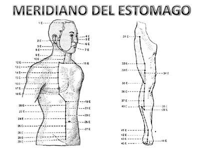 Meridiano-estomago