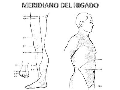 Meridiano-higado