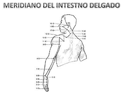 Meridiano-intestino-delgado