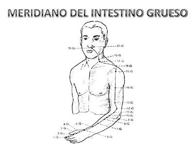 Meridiano-intestino-grueso