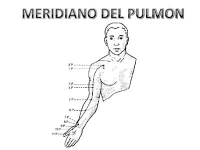 Meridiano-pulmon