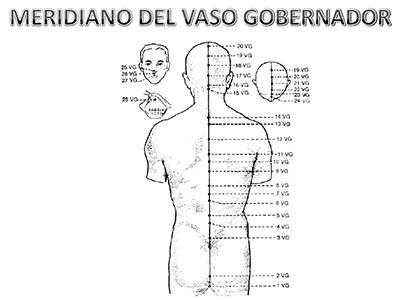 Meridiano-vaso-gobernador