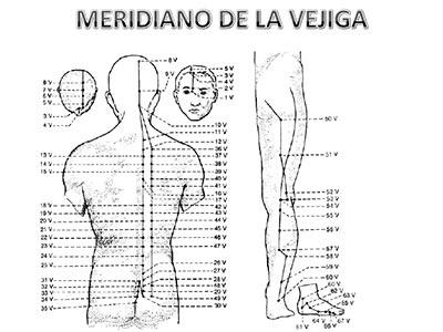 Meridiano-vejiga
