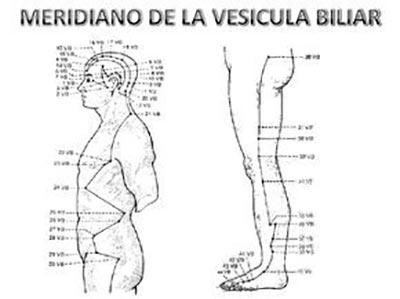 Meridiano-vesicula