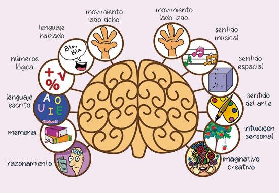Hemisferios-Cerebrales2