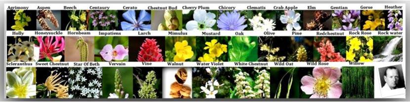 esencias-flores-bach